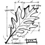 "Stampers Ananymous - Wood Mounted Rubber Stamp - Oak Sketch 4""X3.5"""