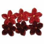 Maya Road - Velvet Point Blossoms - Orange and Brown